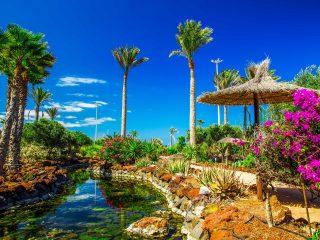 Hanggtime Fuerteventura Palmen